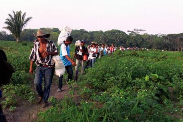 Bombardeos de FFMM ya deja 500 desplazados en Guapi, Cauca