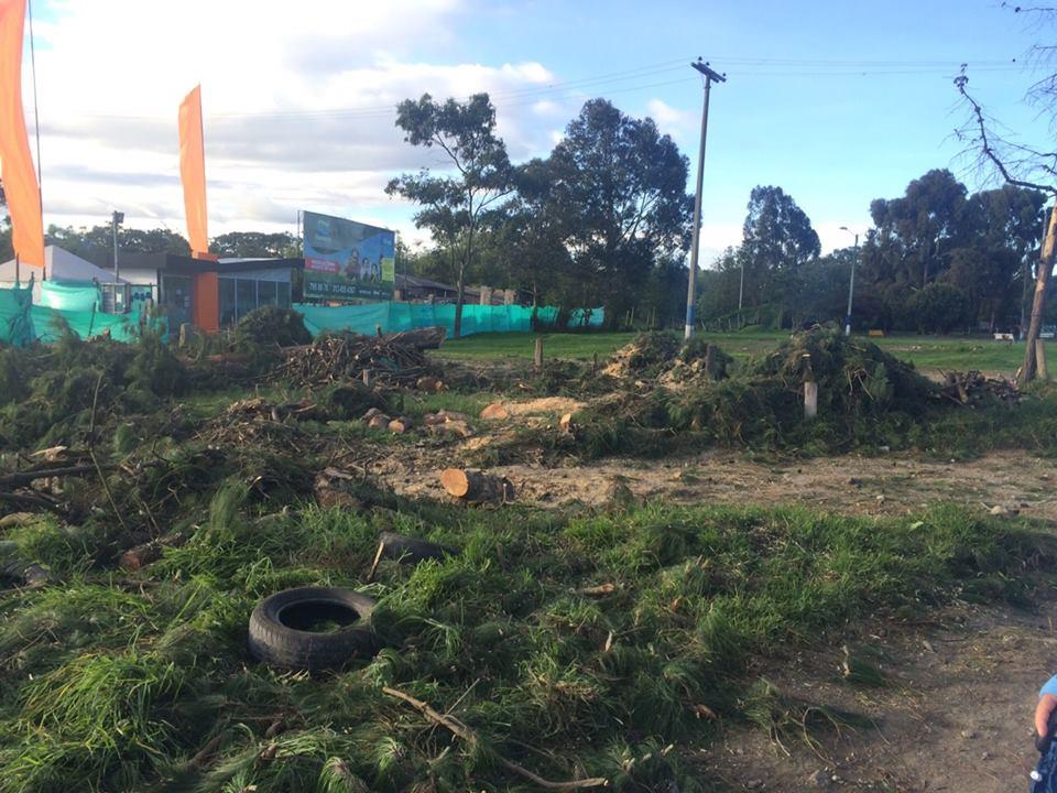 Se abrir investigaci n por tala de rboles en la conejera for Investigacion de arboles