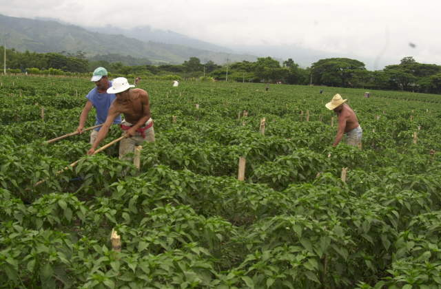 Zidres pretendería extranjerizar y entregar tierras a empresarios