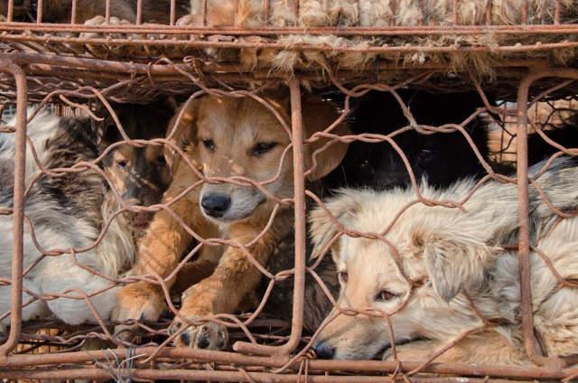 Haz parte de esta campaña para decirle no al sacrificio de perros en China