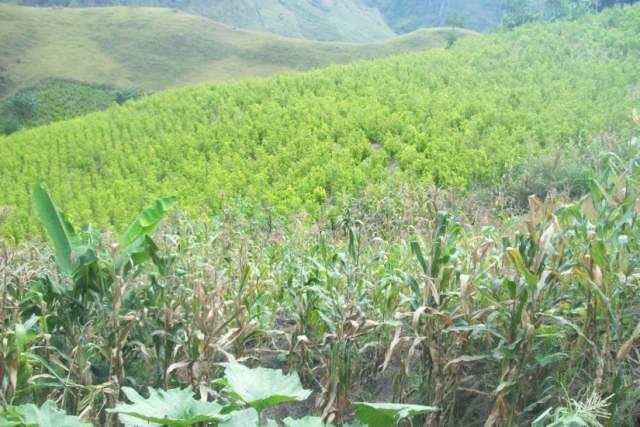 Campesinos de Tumaco y gobierno logran acuerdo sobre sustitución de cultivos