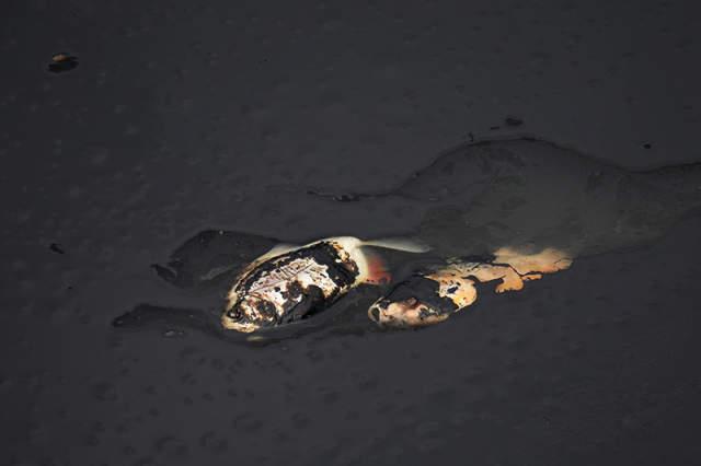 Derrame de petróleo en Putumayo. Foto: Archivo