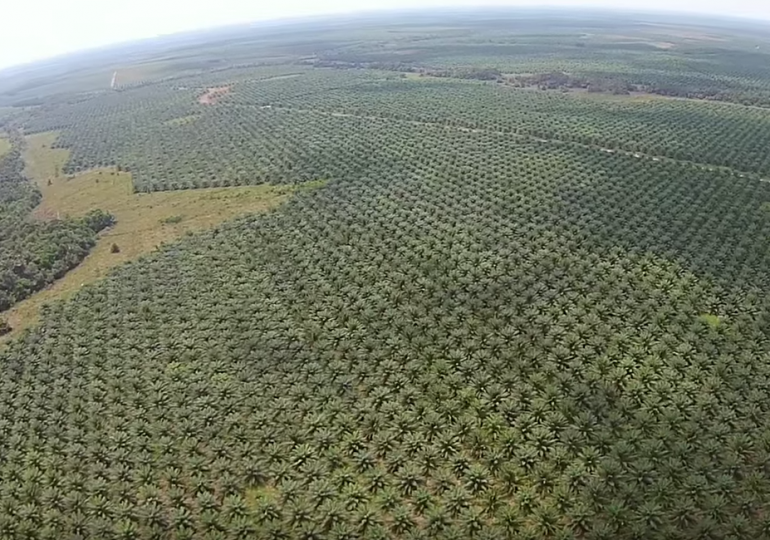 Piden a la UE frenar las violaciones a DDHH por parte de empresas palmeras