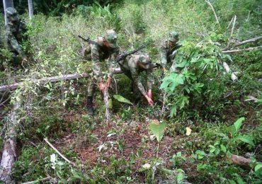 Gobierno incumple acuerdos en erradicación de cultivos de uso ilícito en Putumayo