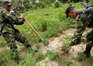 Campesinos del Catatumbo rechazan erradicación forzada por parte del ejército