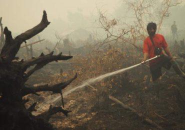 Incendios forestales tienen en peligro a más de 10 mil orangutanes en Indonesia