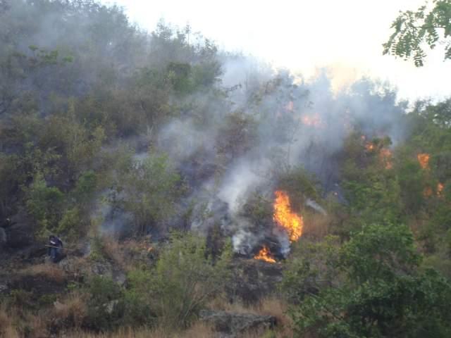 92mil hectáreas de bosques de Colombia presentan incendios forestales