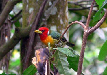 Las aves también son víctimas del cambio climático