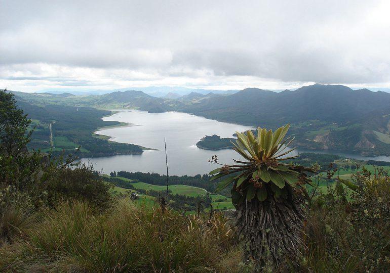 Páramo de Guerrero ha perdido el 98% de bosque andino