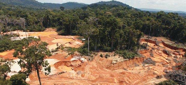 Amazonía habria perdido 19.600 millones de árboles en los últimos meses