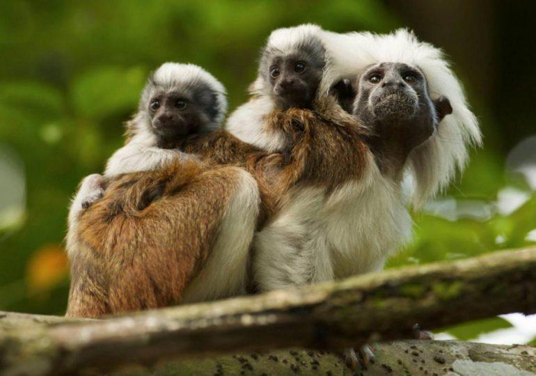 Los humanos son la mayor amenaza contra los primates