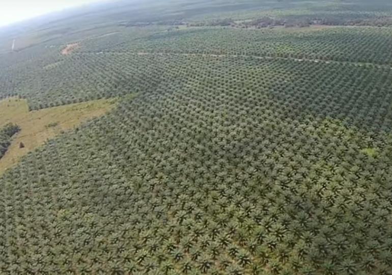 Definición de bosques de la FAO amenaza al ambiente y legitima los monocultivos