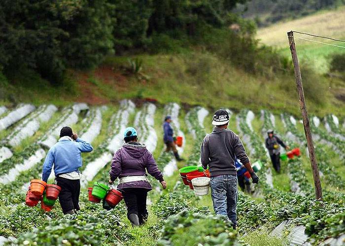 ZIDRES legalizaría mecanismos de acumulación de tierras