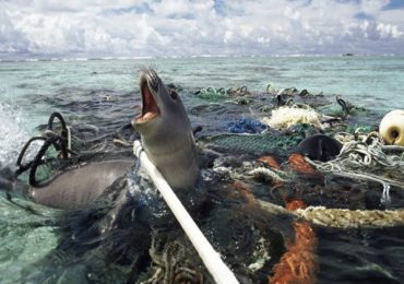 En 35 años habrá más plástico que peces en el océano