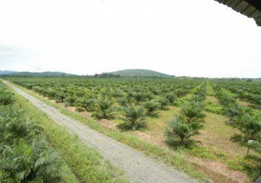Cerca de 19 empresas son las que han acaparado más tierras en Colombia