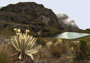 Eco Oro renuncia a proyecto minero en Páramo de Santurbán