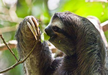La tercera parte de las especies animales se extinguirán por el cambio climático