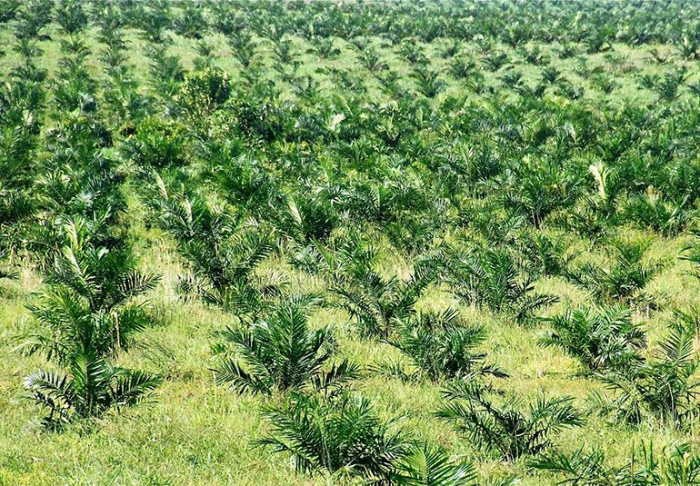 Ley Zidres para acaparadores de tierras afecta territorio colectivos