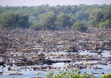 Visita de Convención Ramsar: La última oportunidad de la Ciénaga Grande de Santa Marta