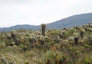 Delimitación de Páramos en Colombia: Nuevos páramos