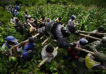 El 60% de las especies de primates del planeta están en amenaza