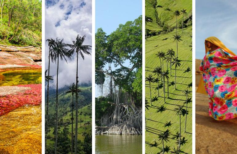 Cerca de la mitad de los ecosistemas de Colombia se encuentran en peligro
