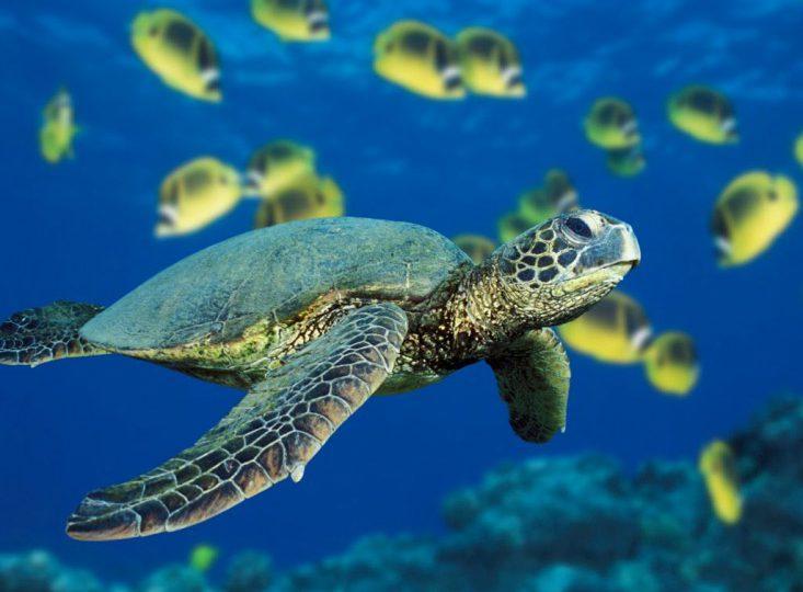 Leyes colombianas se quedan en el papel a la hora de proteger la fauna marina