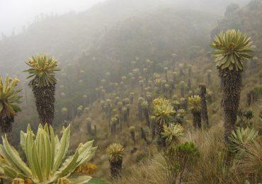 Piden revocar títulos mineros sobre 177.207 hectáreas en zonas de páramo