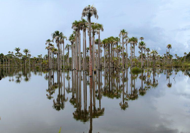 Ordenan suspender operaciones de Poligrow Colombia por daños ambientales