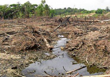 """""""Gobierno no se preparó para impedir altas tasas de deforestación en el posconflicto"""""""