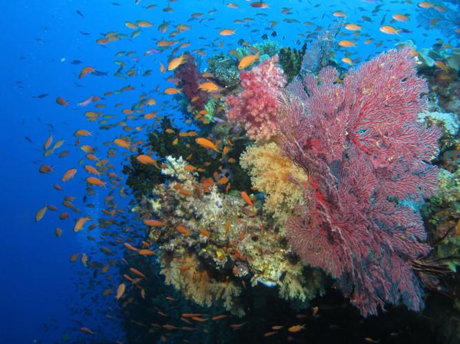 La amenaza petrolera sobre biodiversidad del Archipiélago de San Andrés