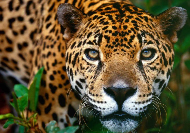 58% de la vida silvestre ha desaparecido en 42 años