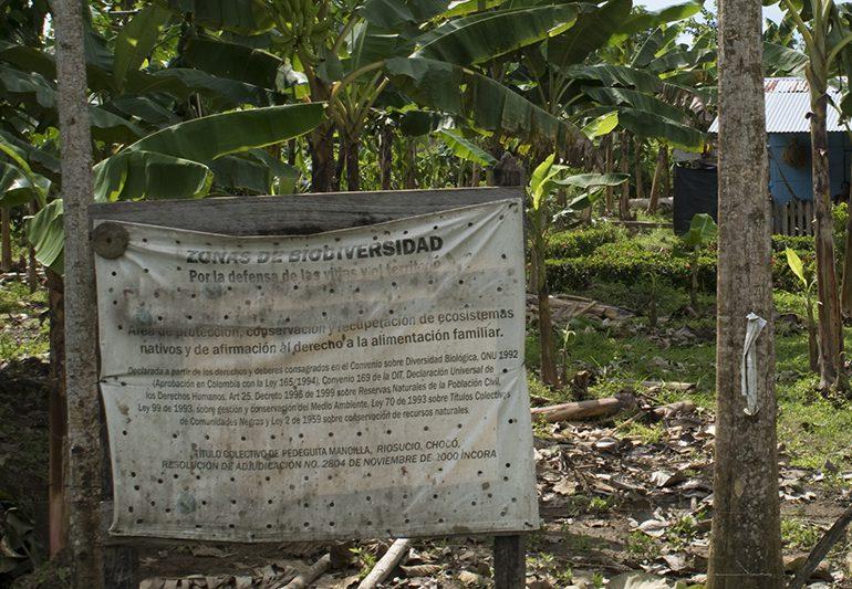 Empresario ganadero amenaza a reclamante de tierras en Curvaradó