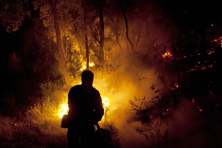 Guatemala ha perdido más de 26 mil hectáreas de bosques