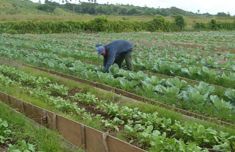 Productos orgánicos de Cuba son reconocidos en EE.UU