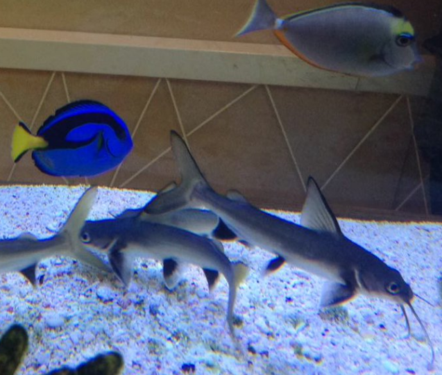 Alcaldía conocía otras alternativas para proteger peces incautados en Atlantis