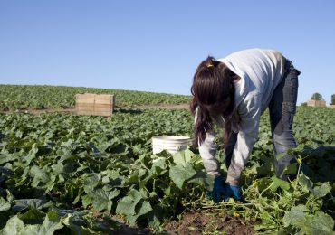 Mujeres rurales trabajan más que los hombres y ganan menos