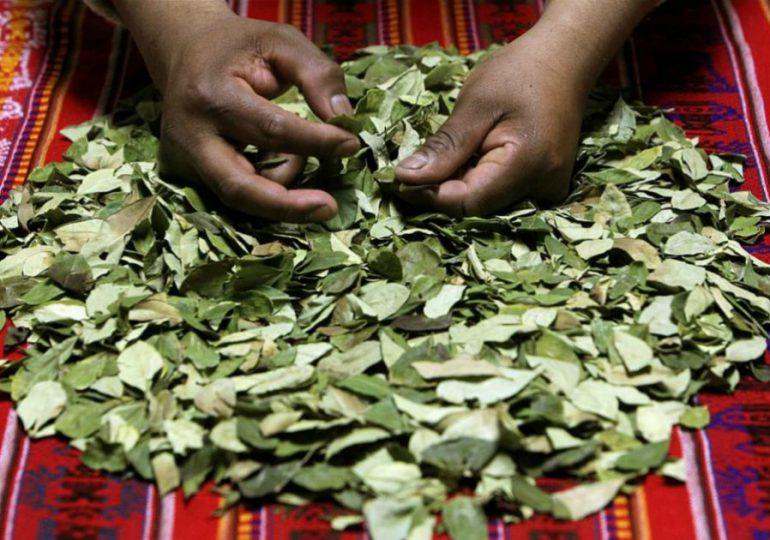 Mujeres cocaleras insisten en la sustitución de cultivos con enfoque de género