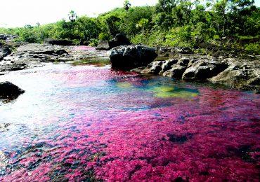 Proyecto de ley afectaría gravemente los Parques Naturales Nacionales
