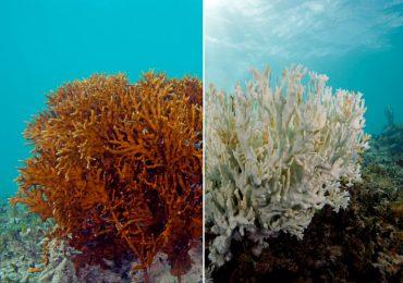 El planeta ha perdido el 50% de los arrecifes de coral