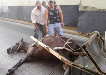 Centro Democrático buscaría perpetuar la explotación animal de caballos cocheros