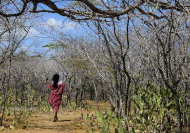 Empresas de Irlanda, Reino Unido, Suiza y Australia serían responsables de violar de DDHH en la Guajira