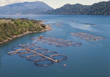 Producción de salmón tiene en riesgo ecosistemas marinos de la Patagonia