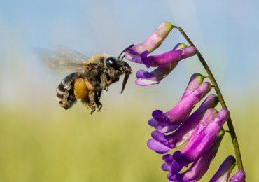 En Colombia mueren 10.500 colmenas de abejas cada año
