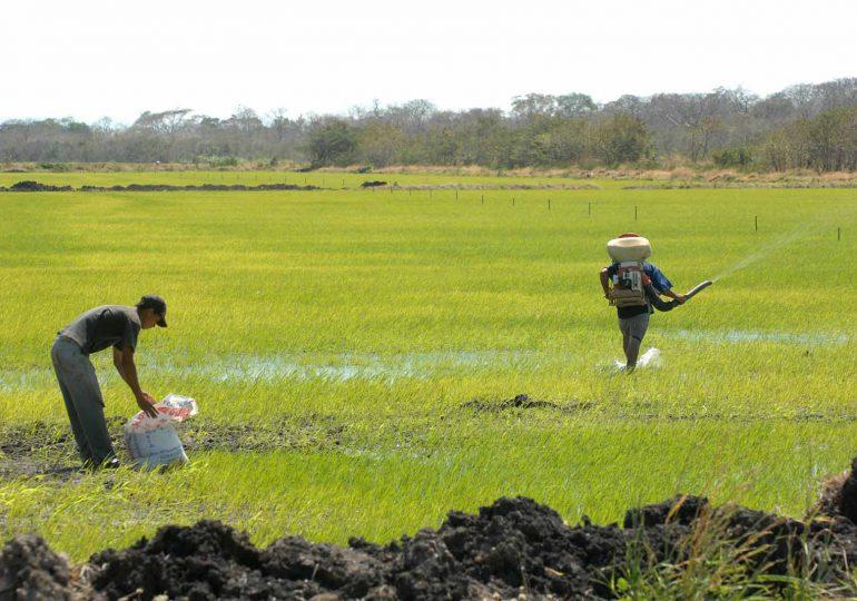 """Están agotadas las posibilidades con Min. Agricultura"": Arroceros"