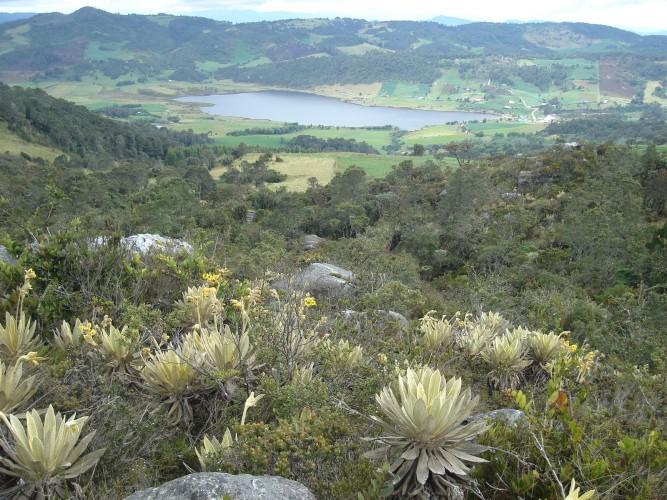 Conflictos por intereses ponen en peligro los Páramos en la Sabana de Bogotá