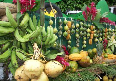 En el Ariari buscarán ser patrimonio agrícola de la nación