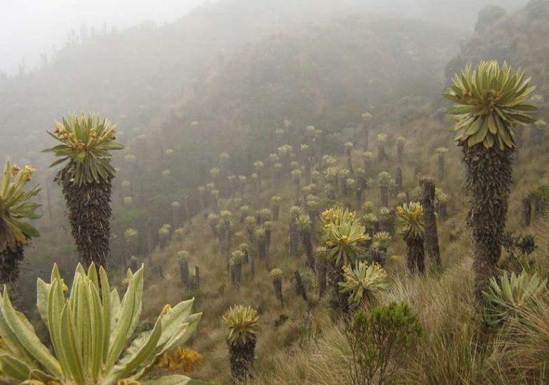 Impulsan consulta popular para salvar el páramo de Chilí en Quindio
