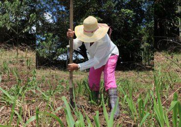 Pago por servicios ambientales: Algunos riesgos de mercantilizar todo
