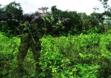 Alejandro Carvajal, joven de 20 años asesinado por el Ejército en Catatumbo: ASCAMCAT
